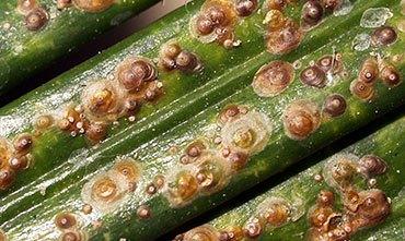 Болезни и вредители растений