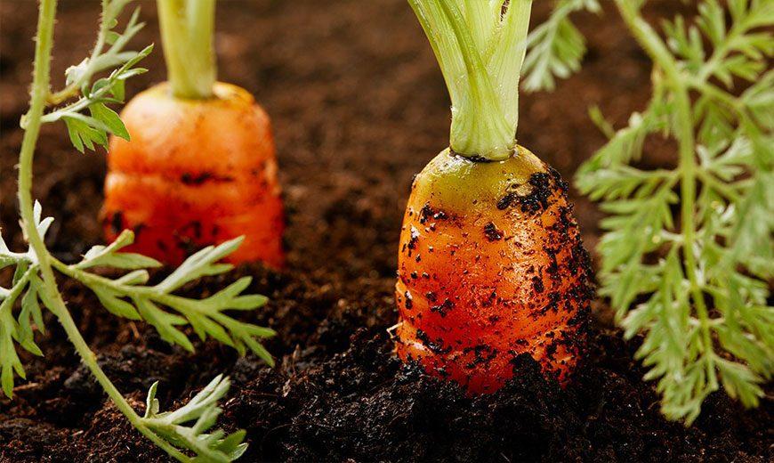 Хранение овощей и фруктов или как сохранить урожай