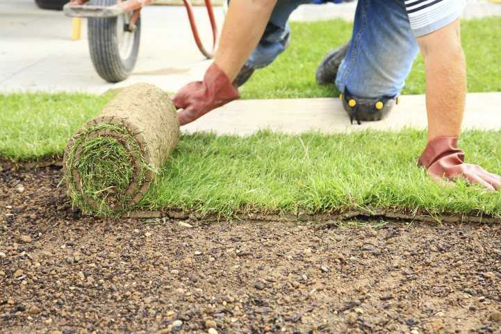 Как укладывать рулонный газон: советы по выбору и технология укладки. 120 фото и видео урок для начинающих
