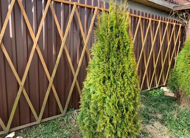 Как украсить забор на даче: идеи декорирования и ландшафтного дизайна