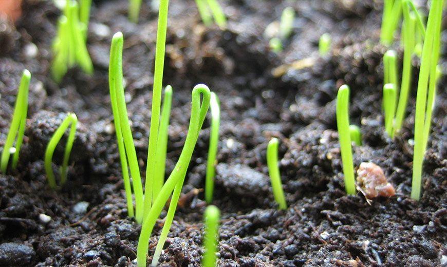 Как вырастить семена?