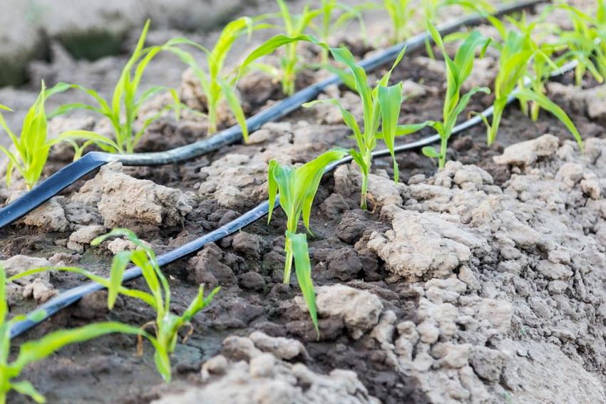 Капельный полив из бочки для теплицы: залог хорошего урожая на многие годы
