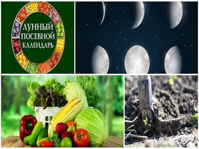 Лунный посевной календарь на 2021 год для огородника и садовода