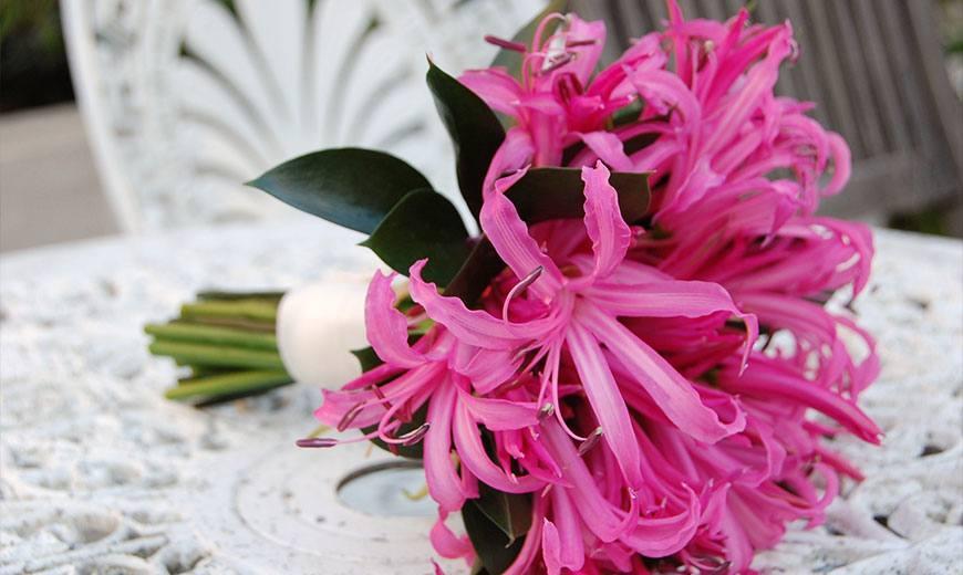Монарда – ароматное украшение любого сада