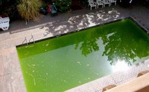 Почему зеленеет вода в бассейне?