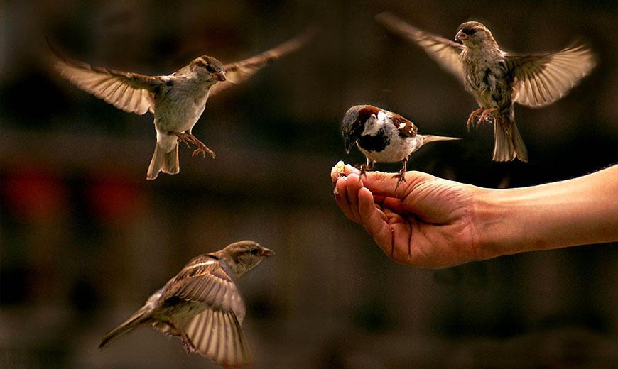 Полезные птици и насекомые в саду