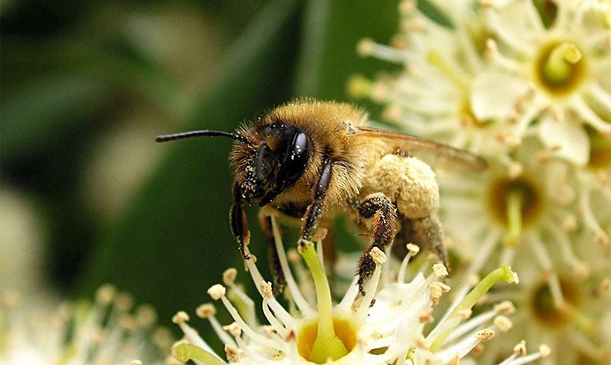 Полезный вкусный мед - свойства, применение, хранение