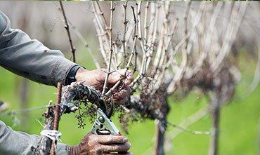 Работы в саду в марте - что надо делать в марте садоводу, огороднику и цветоводу