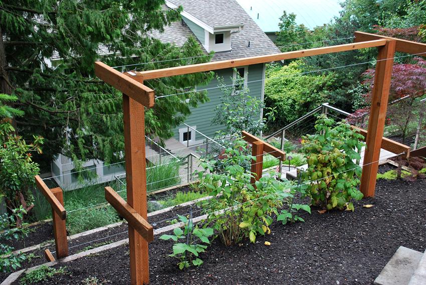 Шпалера для малины: оптимальное приспособление для ухода за растением
