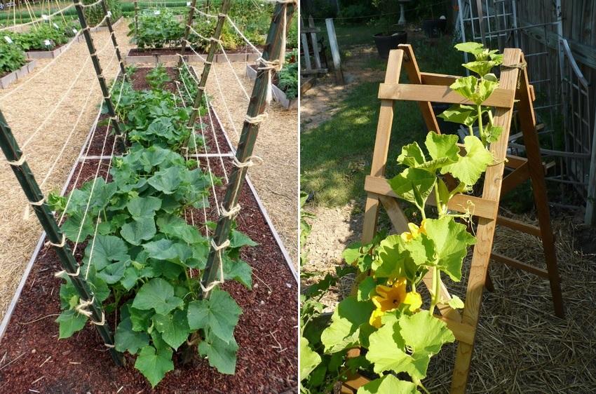 Шпалера для огурцов: простой и удобный способ получения отличного урожая