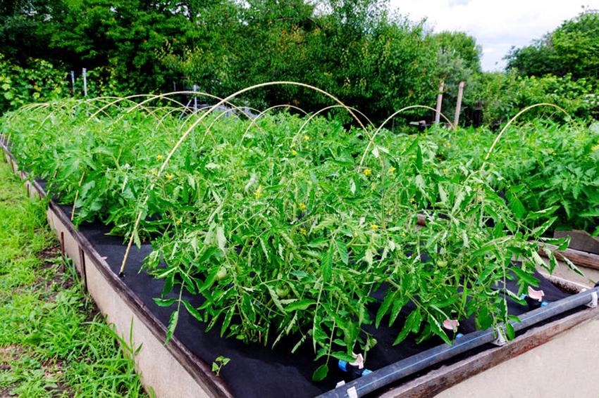Укрывной материал для грядок: хороший урожай без лишних хлопот
