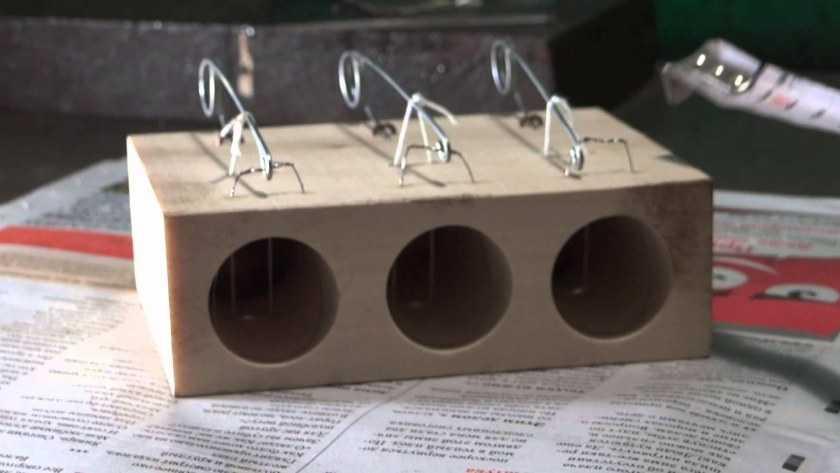 виды мышеловок, материалы изготовления + мастер-класс по изготовлению и установке своими руками