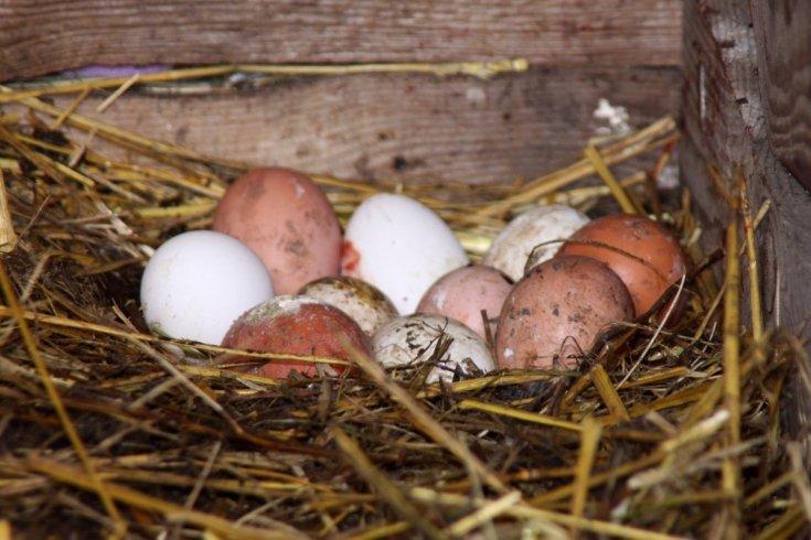 Гнезда для кур несушек своими руками